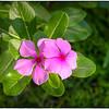 2016-07-01_P1010746_7_8_tonemapped,default +,smed_Wild flower,Clearwater,Fl