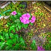 2016-06-17_P1280561_2_3_4_5_tonemapped,paintly mine_Wild flowers,Clearwater,Fl