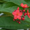 2017-10-13_P1110108_Wild Flower