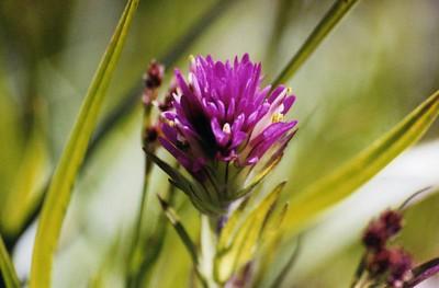 Lassen Volcanic National Park: Flora & Fauna