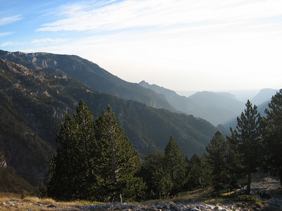 Pinus nigra, or possibly P. heldreichii (between Refuge A and Mytikas, Mount Olympus)