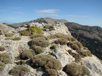 Astragalus spec. and Minuartia stellata (Mt. Killini)
