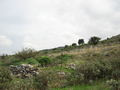 Habitat of Crocus goulimyi ssp. goulimyi and Euphorbia dendroides (east of Areopoli)