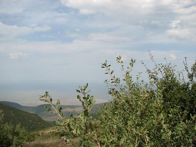Quercus spec. (near Belen Pass, Nur Dağlari, Hatay, S Turkey)