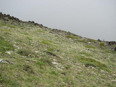 Phlox difussa (Mount Townsend, summit ridge)
