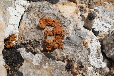 Dark orange Xanthoria elegans (Rood dooiermos in Dutch) and white Diploicia canescens (Kauwgommos in Dutch)