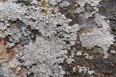Caloplaca teicholyta, Witte citroenkorst in Dutch (2km south of the mountain Eretos [1355m])
