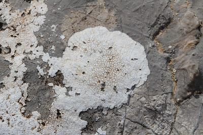 Aspicilia calcarea - Plat dambordje in Dutch (Coll dels Reis, 682m)