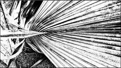 Non-geometric geometry: sago palm debris  #2 (black and white)