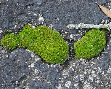 The Moss Islands