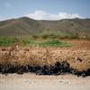 Campos de cultivo contaminados por plasticos