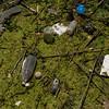 Limpieza de plasticos en el rio Carraixet