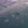 Vídeo sobre plásticos en los océanos (poco visual)