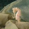 Seahorse - Defending Our Oceans Tour