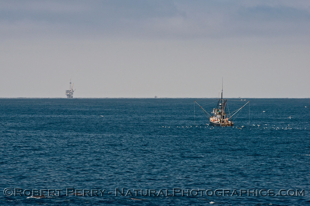 vessel fishing Alamo & oil Platform Holly 2014 07-08 SB Channel West-403