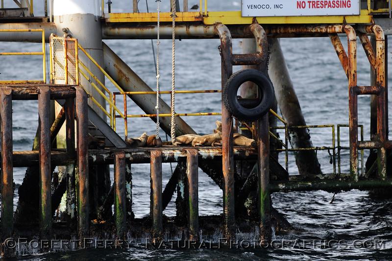 Platform Holly close 2009 05-02 SB Channel b - 047