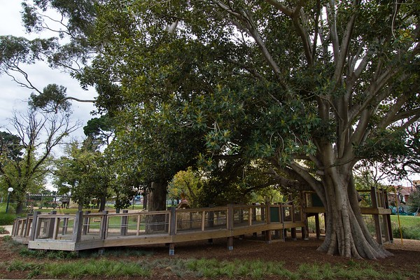 sloping timber walkway around tree with post and rail and wire mesh fence