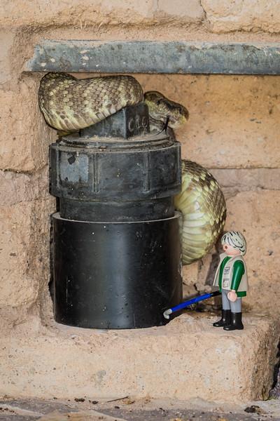 black-tailed ratlesnake, Crotalus molossus (Viperidae) and mini herpetologist H-W (Playmobil) snake whispering with his stump-ripper. Tucson Mountains, Tucson, Pima Co., Arizona USA