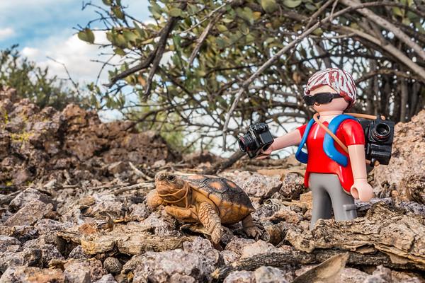 Playmobil photographer and a baby Sonoran Desert Tortoise, Gpherus morafkai (agassizii) (Testudinidae). Tucson Mountains, Tucson, Pima Co., Arizona USA