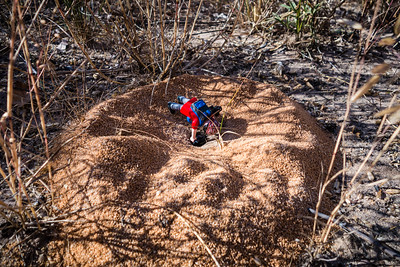 ant mound. Khaudum N.P., Kavango Namibia