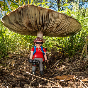 Playmobil photographer and teh giant mushroom. Gardner Canyon, Santa Rita mountains, Pima Co. Arizona