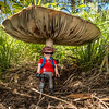 Playmobil photographer and teh giant mushroom. Gardner Canyon, Santa Rita mountains, Pima Co. Arizona