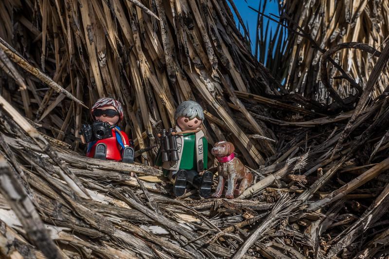 Playmobil Explorers sitting in a Joshua Tree. Darwin Hills Joshua Tree Forest, Inyo Co. California USA