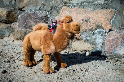 camel ride. Swakopmund, Erongo Namibia