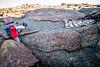 horned adder. Messum Crater, Erongo Namibia