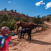 Playmobil photographer and  domestic cattle, <i>Bos primigenius</i> (Bovidae). Cottonwood Canyon Road, Utah