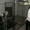 Pleasant Kennels in Leominster held a ribbon cutting on Thursday, July 25, 2019. Manager Taryn Lawrence gets a howl from one of the Great Danes staying at the facility just before the ribbon cutting. SENTINEL & ENTERPRISE/JOHN LOVE
