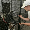 Pleasant Kennels in Leominster held a ribbon cutting on Thursday, July 25, 2019. Manager Taryn Lawrence gives some treats to a couple of the Great Danes staying at the facility just before the ribbon cutting. SENTINEL & ENTERPRISE/JOHN LOVE