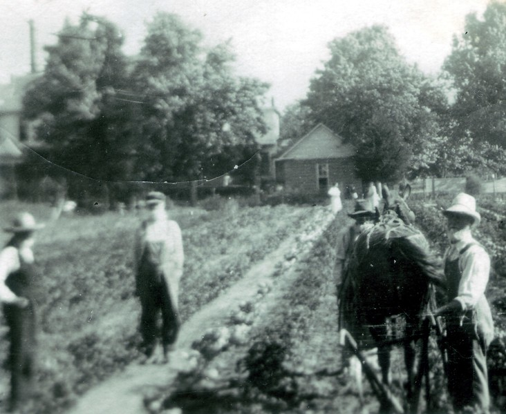 Working the fields near the Old Folks Home. The home had over 100 acres of land to grow crops and large gardens for vegetables and fruit. It also had hundreds of chickens and milk cows along with beef that could be butchered.
