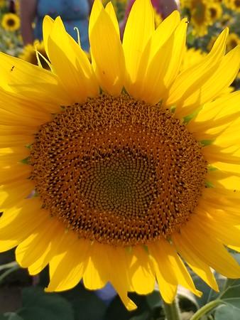 Please wash me carwash sunflowers