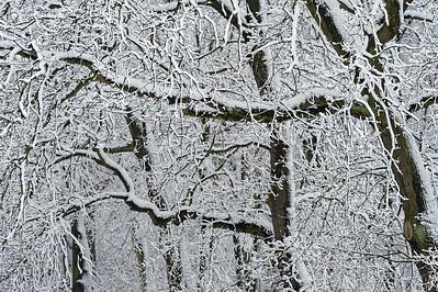Rytmy drzew - śnieg
