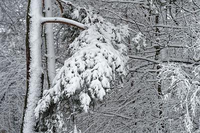 Zimowe abstrakcje - ciężar śniegu