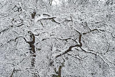 Zimowe abstrakcje - śnieżne błyskawice