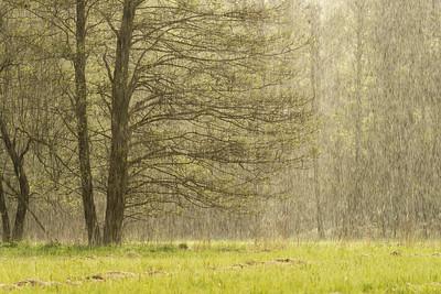 Ulewny, wiosenny deszcz. Gwałtowny i piękny.