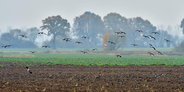 Jesienne migracje