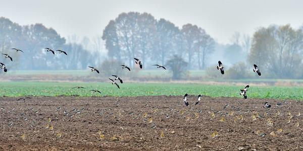 Lądowanie w polu
