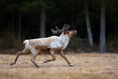 """Rudolf"""