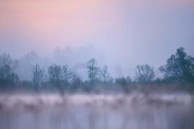 © Paweł Pawlak - Fotografia przyrodnicza