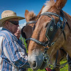 1. Larry Waters (left) and Lee Carlson prep Larrys two half-Belgian mules for the plowing bee.