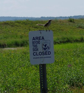 Bird on the Restricted Sign