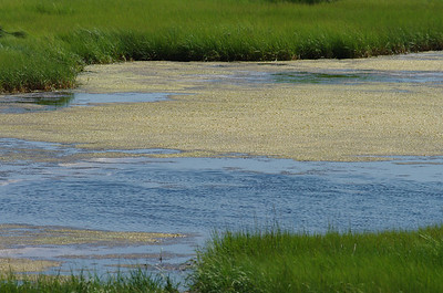 Marsh with Pool of Brackish Water