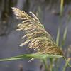 Plum Island Nature preserve