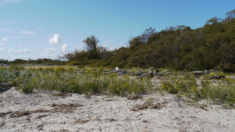 Plum Island Beach