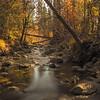 Fall along Wolf Creek