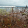 The waters of Lake Almanor rising above the natural shoreline.   Located in northeastern California. Taken May 2016.