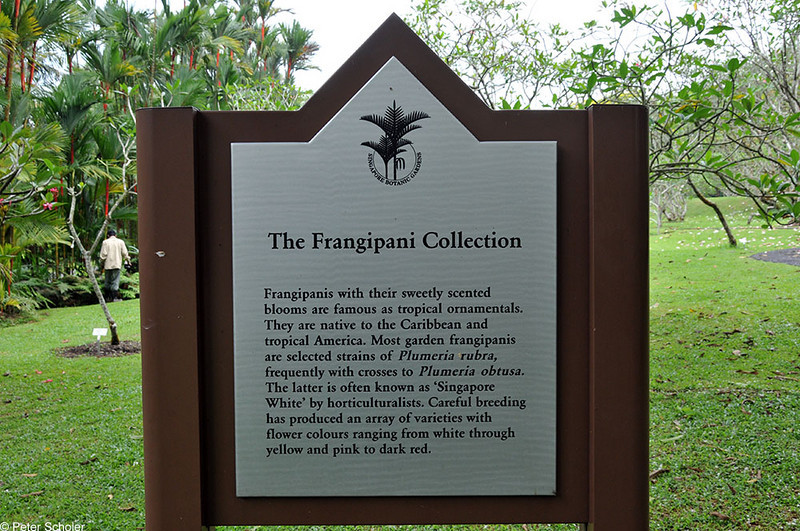 Singapore Botanic Gardens.